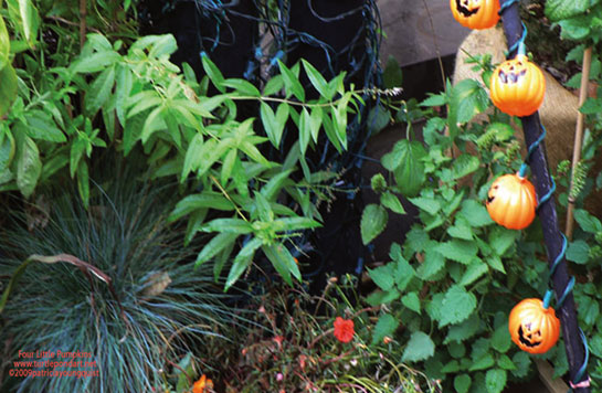 Four Little Pumpkins larger view