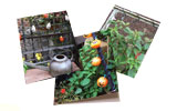 Assorted Halloween Note Cards Boxed Set